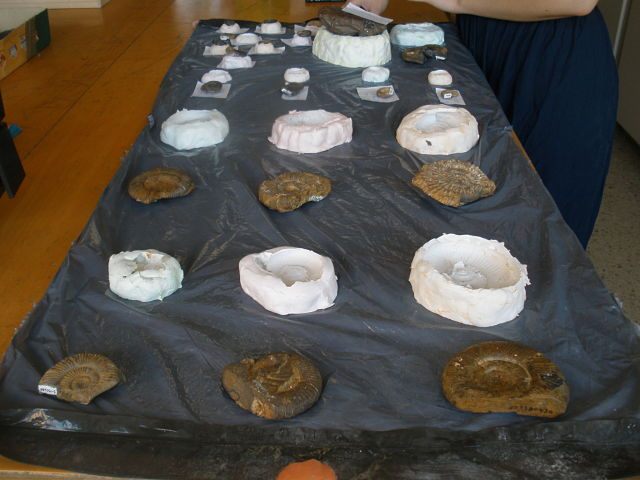 Moldes de ammonites y los fósiles originales