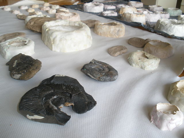 Comparativa de réplicas y fósiles