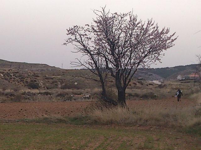 Prospección Castel de Cabra (Teruel)