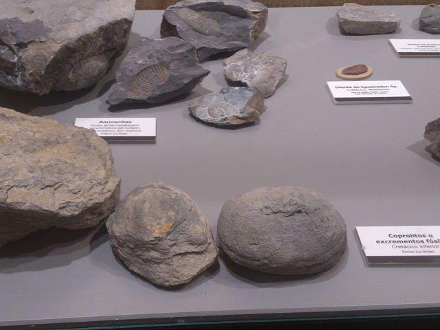 Fósiles Barranco Perdido