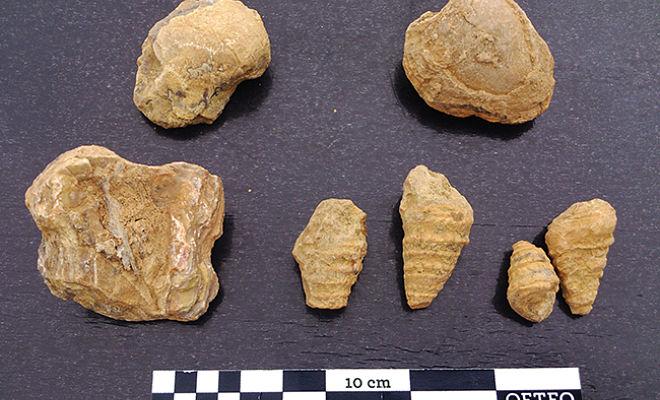Fósiles de Castel de Cabra