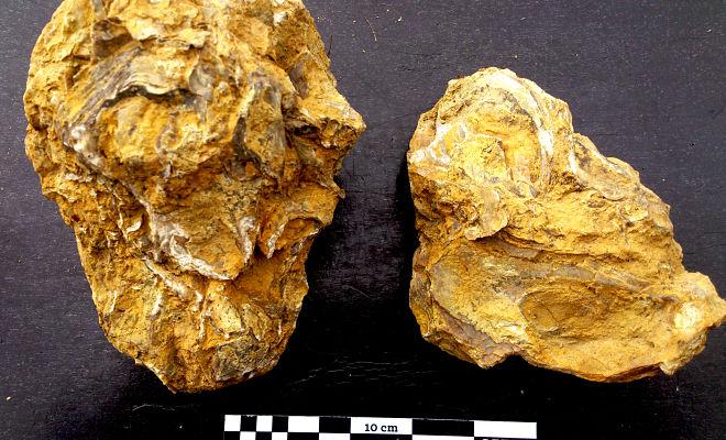 Fósiles de ostreidos